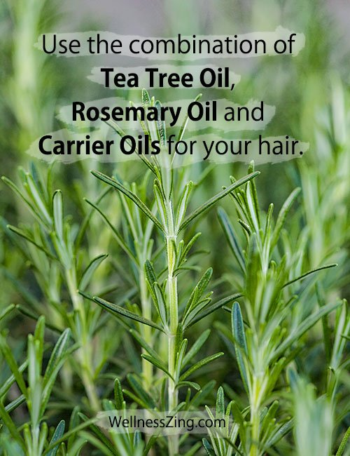 Use the Combination of Tea Tree Oil, Rosemary Oil and Carrier Oils for Hair Care