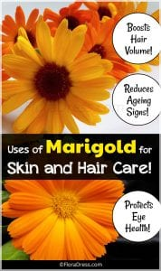 Uses of Marigold for Skin and Hair Care