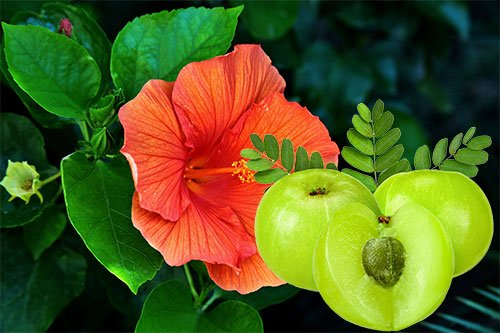Hibiscus Leaves and Amla Powder Hair Mask