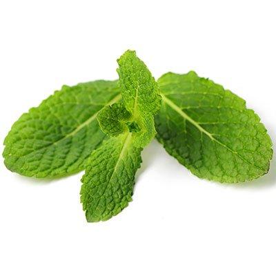 Mint Leaves Has Anti-septic and Anti-Inflammatory Properties