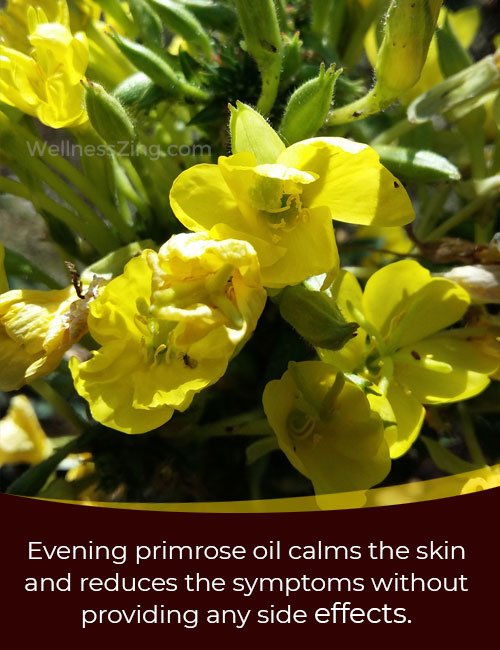 Benefits of Evening Primrose Oil for Eczema