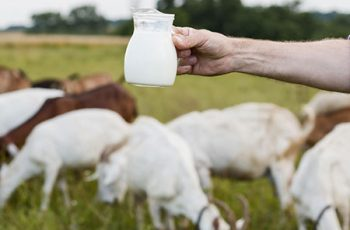 Goat Milk Benefits for Hair and Skin