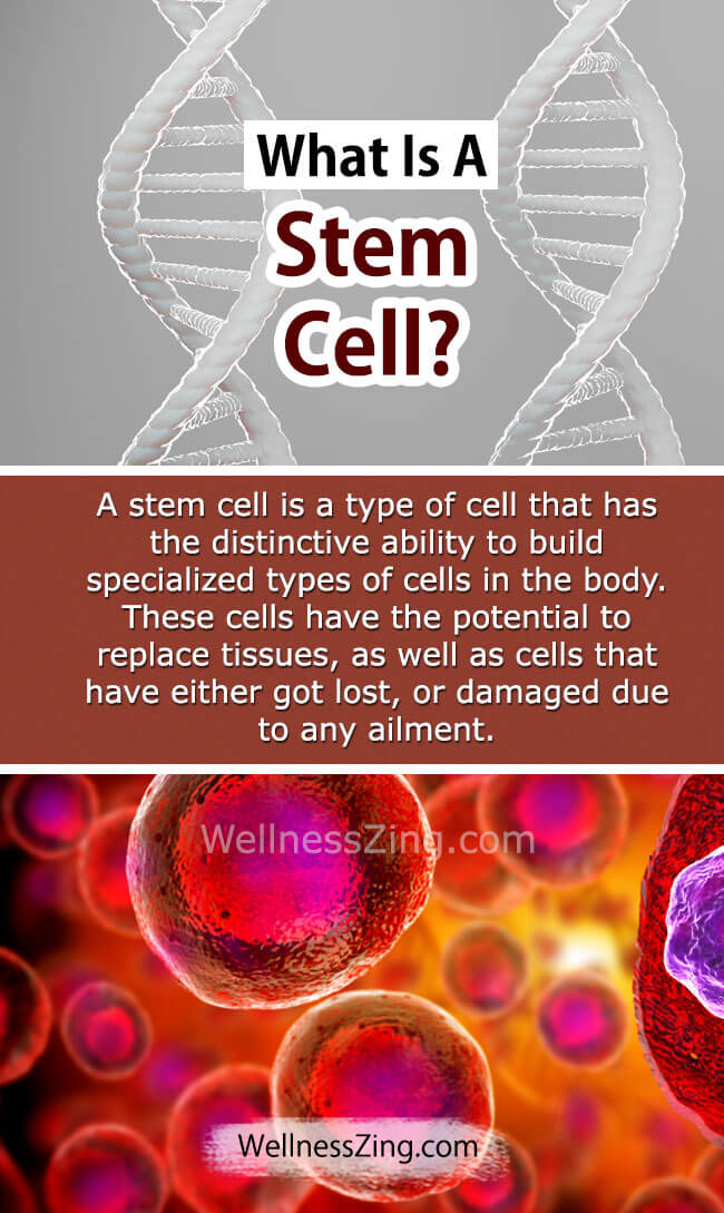 Stem Cell Importance in Human Body