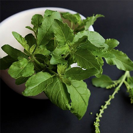 Holy Basil or Tulsi Health Benefits