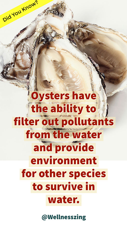 Oysters Filter Out Pollutants from Water
