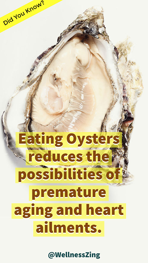 Oysters Slow Down Ageing